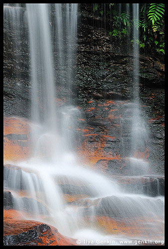 Weeping Rock, Valley of the Waters, Wentworth Falls, Blue Mountains, NSW, Australia
